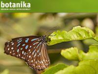 Schmetterlingsfoto von der botanika-Website