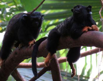 2 kleine Affen