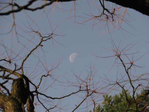 Mond am Himmel, hinter Zweigen