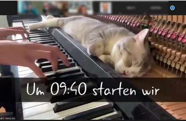 Katze im geöffneten Klavier vor einer Reihe Klavierhammer, Hände spielen Klavier und massieren die Katze